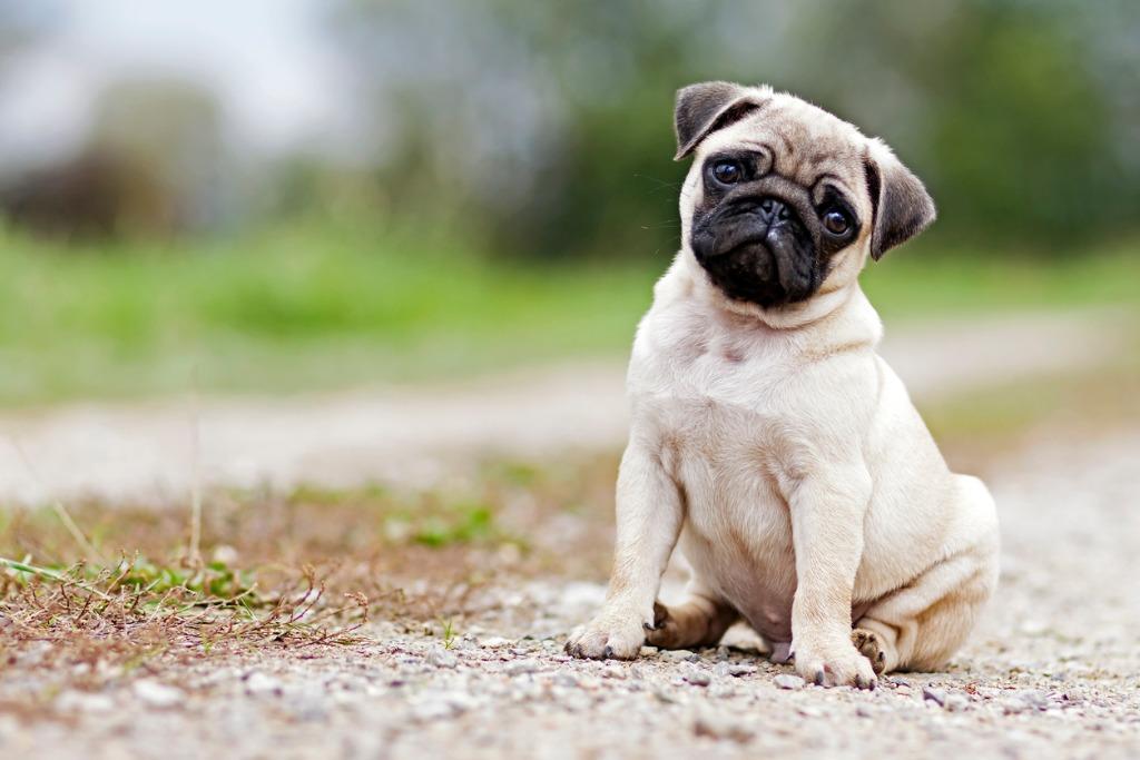 犬 成長 いつまで